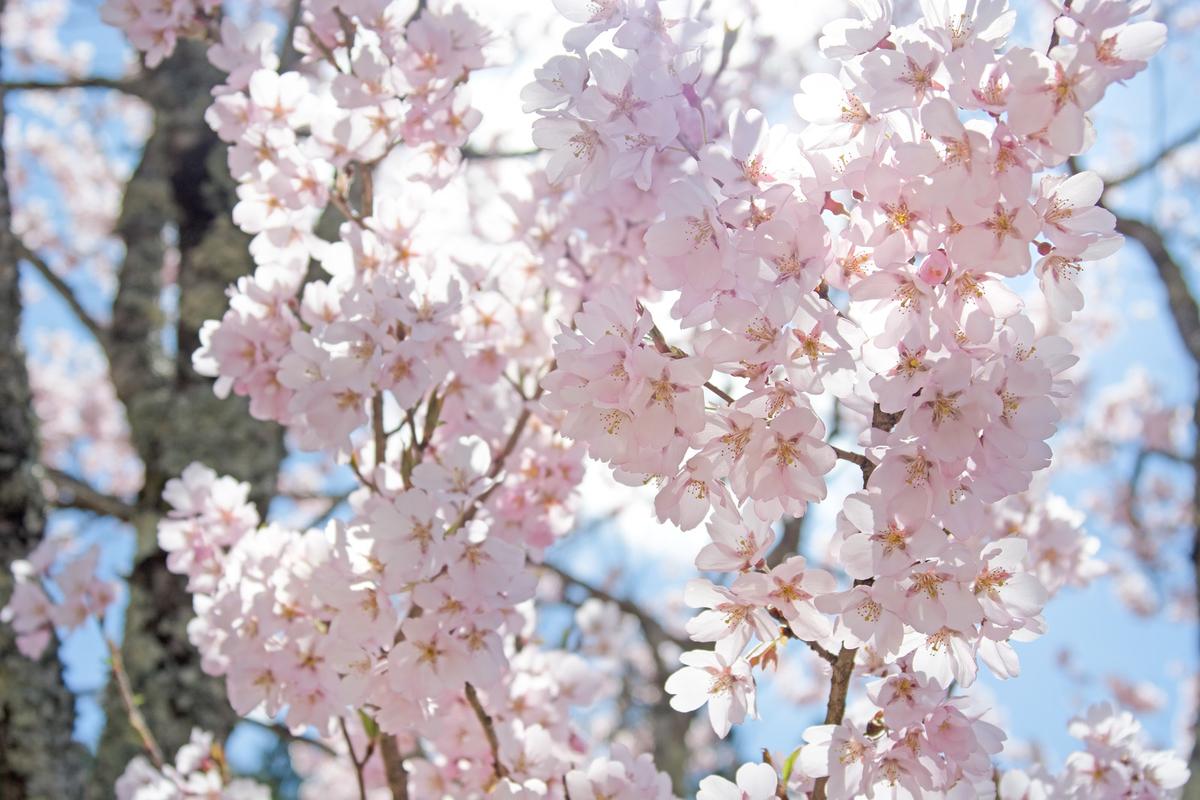 f:id:yoshi32blog:20200331200108j:plain