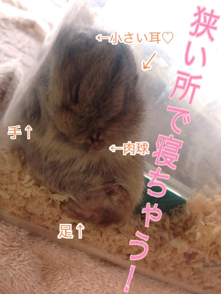 f:id:yoshi91:20160825140831j:plain