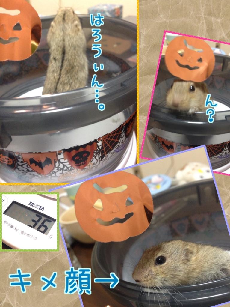 f:id:yoshi91:20161021230054j:plain