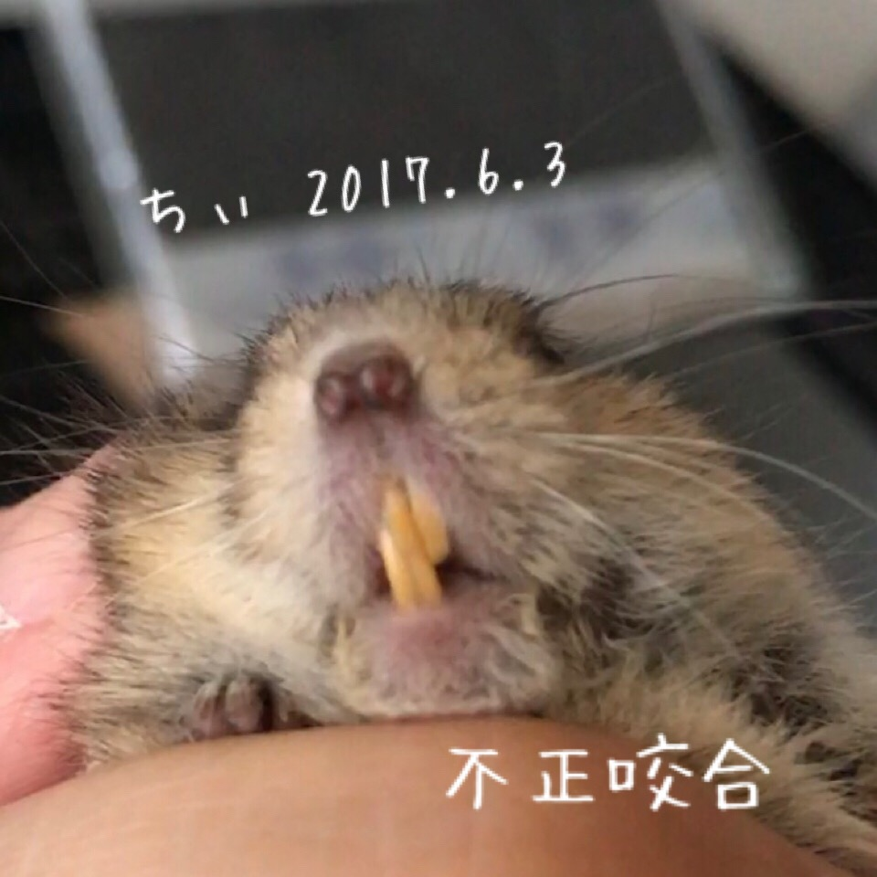 f:id:yoshi91:20170604123020j:plain