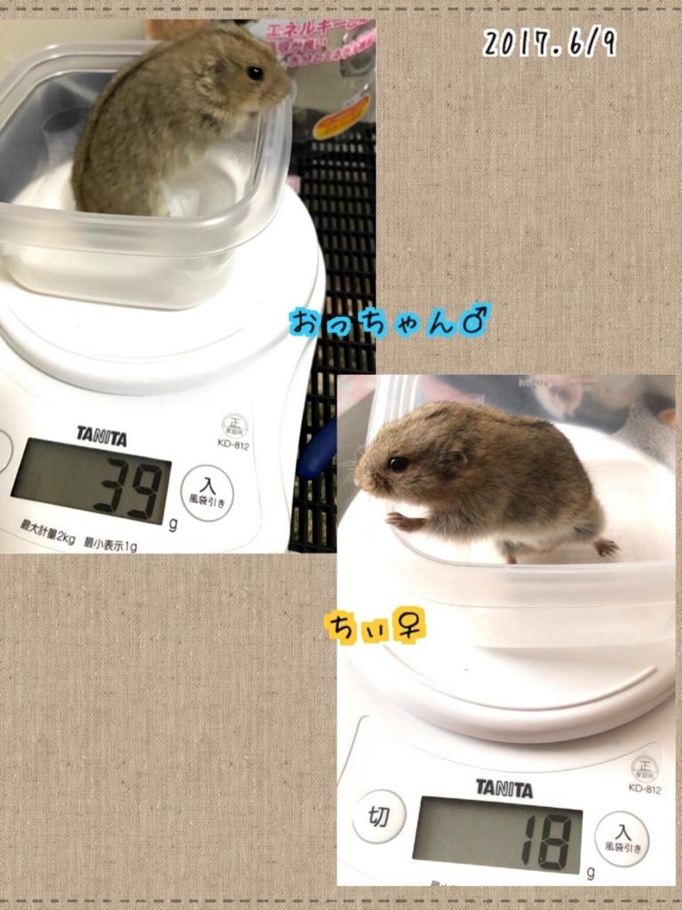 f:id:yoshi91:20170609130545j:plain