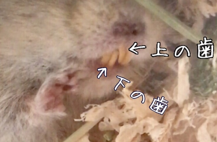 f:id:yoshi91:20170612211115j:plain