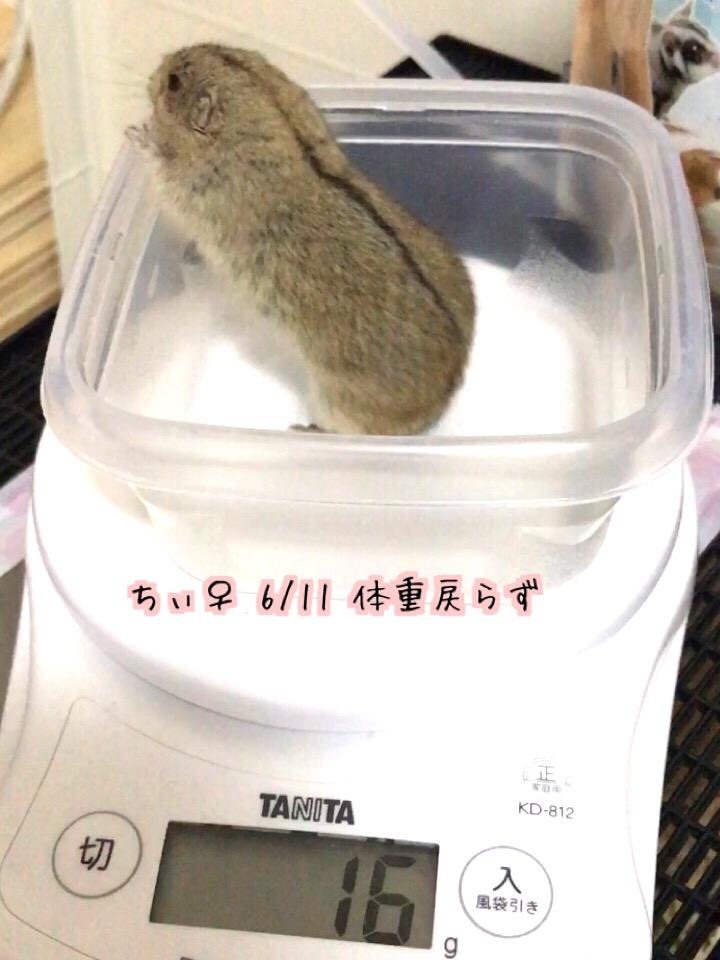 f:id:yoshi91:20170612211150j:plain