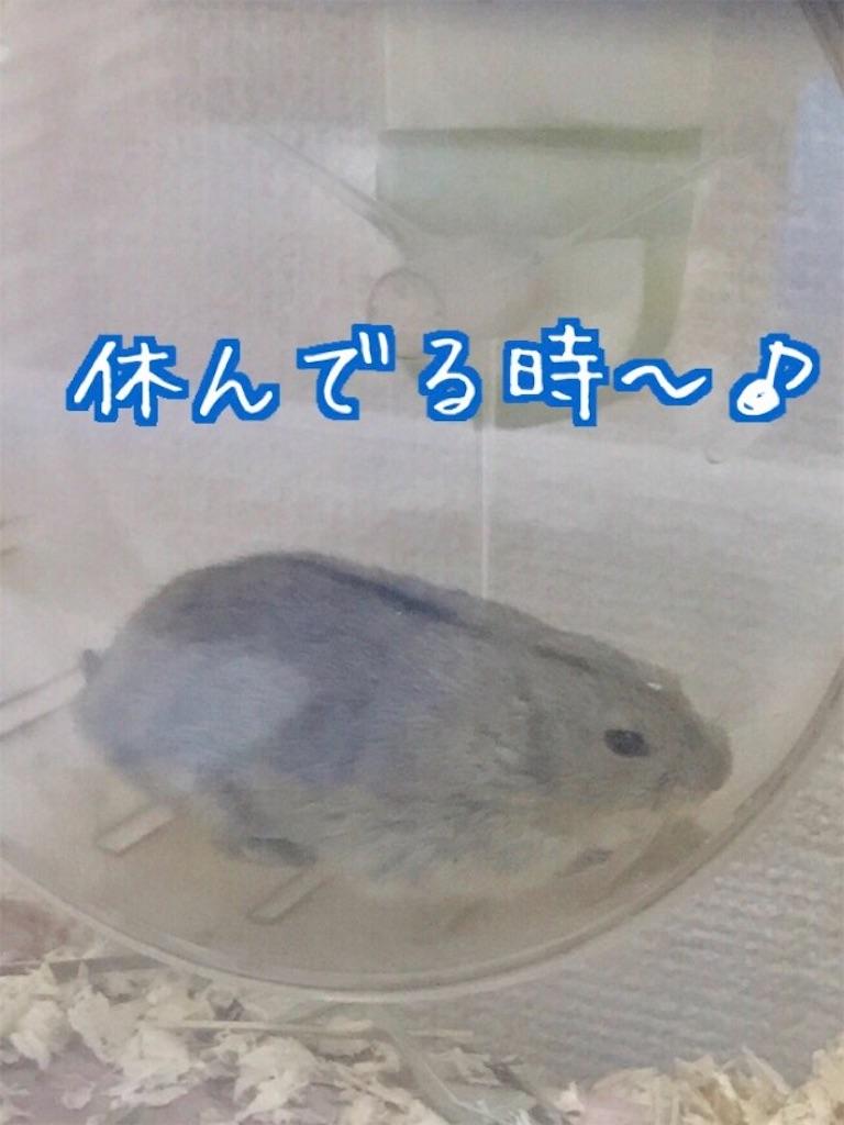 f:id:yoshi91:20170726202900j:image
