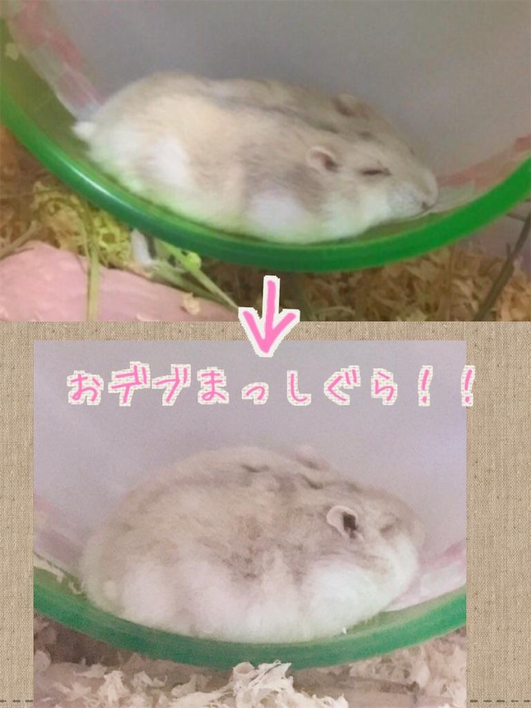 f:id:yoshi91:20170731192203j:image