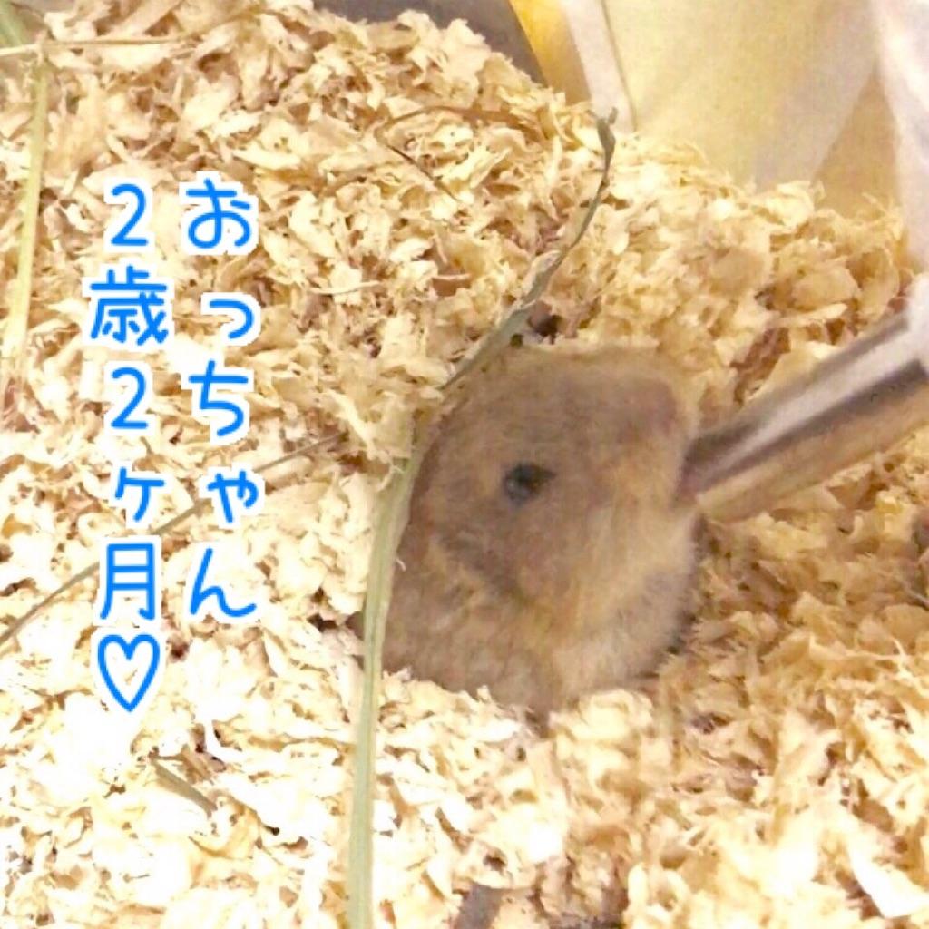 f:id:yoshi91:20170827120055j:image