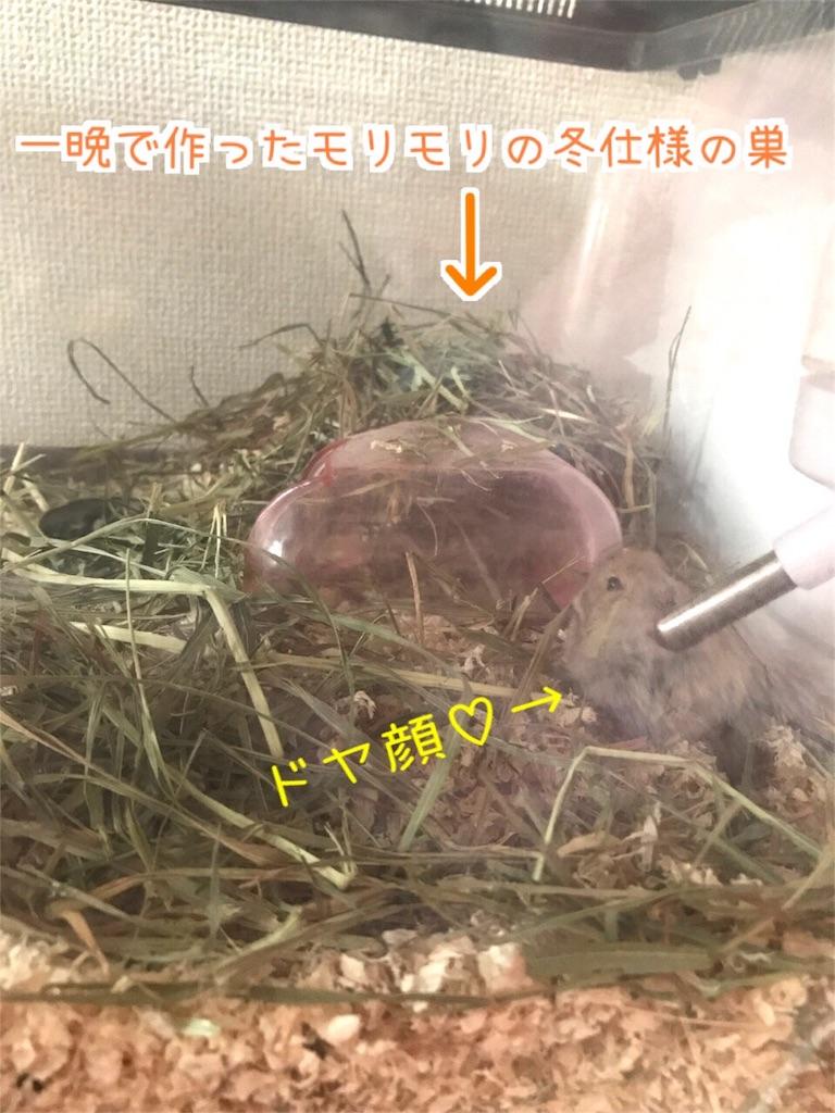 f:id:yoshi91:20171024132846j:image