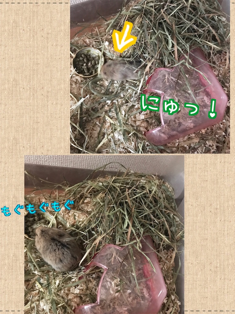 f:id:yoshi91:20171024133716j:image