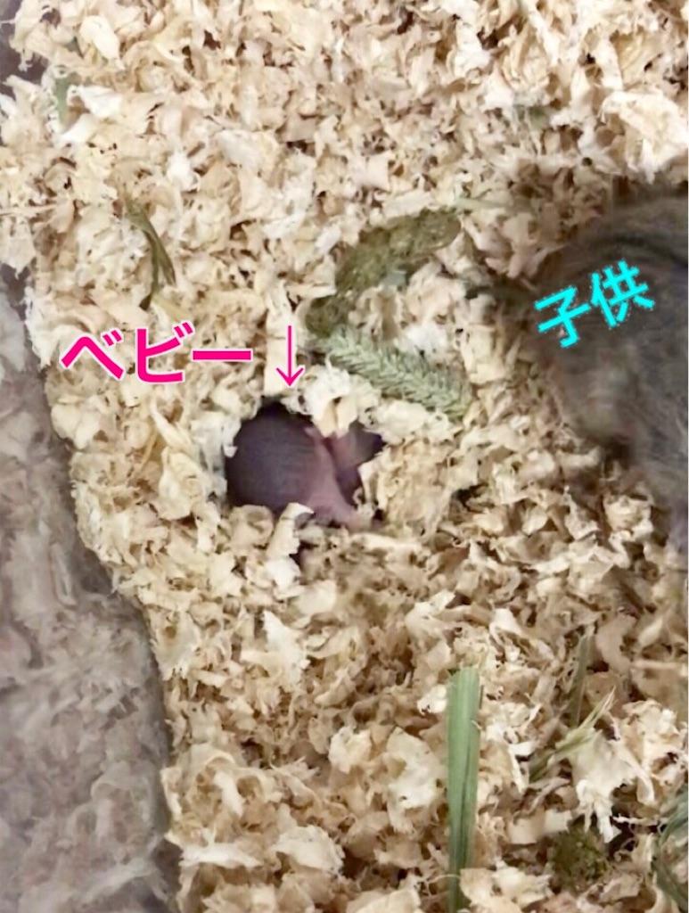 f:id:yoshi91:20190618015307j:image