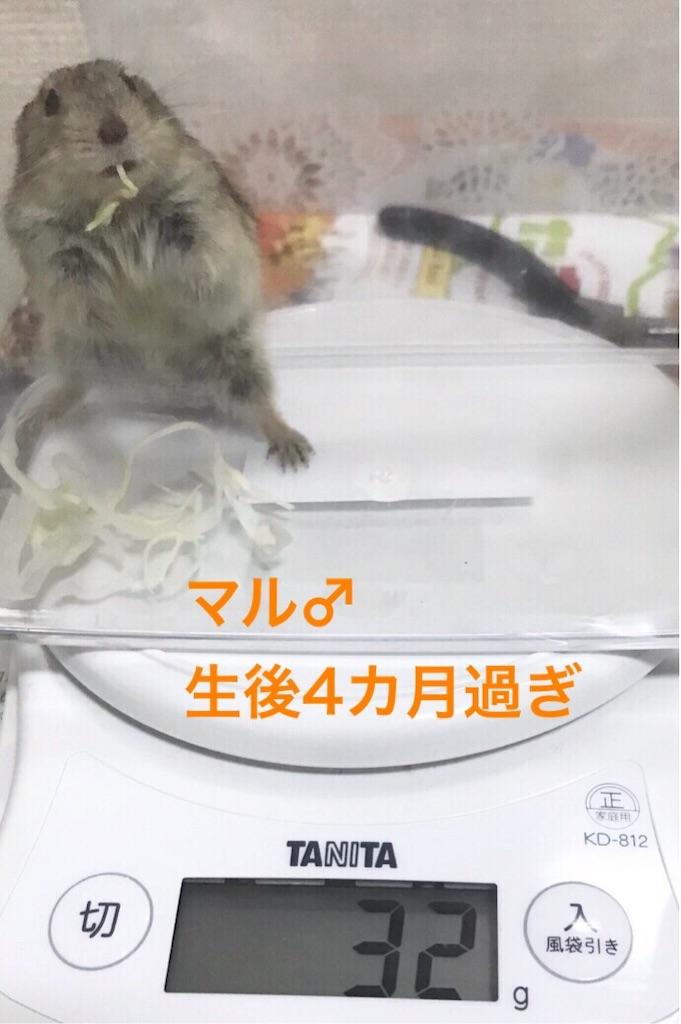 f:id:yoshi91:20190618044457j:image