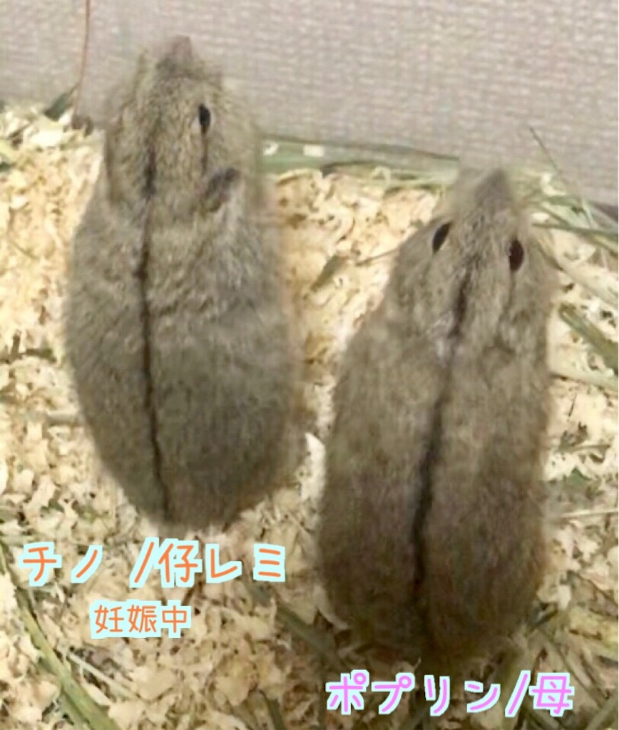 f:id:yoshi91:20190712013842j:image