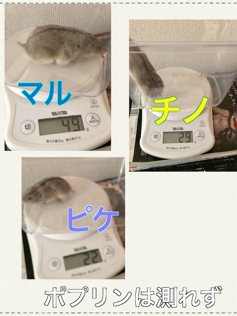 f:id:yoshi91:20190808050554j:image