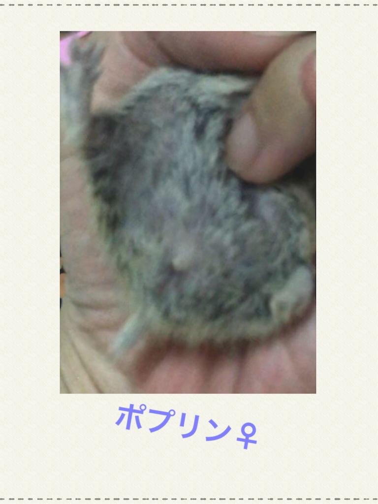 f:id:yoshi91:20190904044007j:image