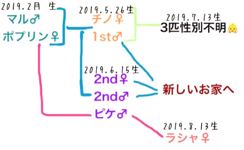 f:id:yoshi91:20190917141743j:image