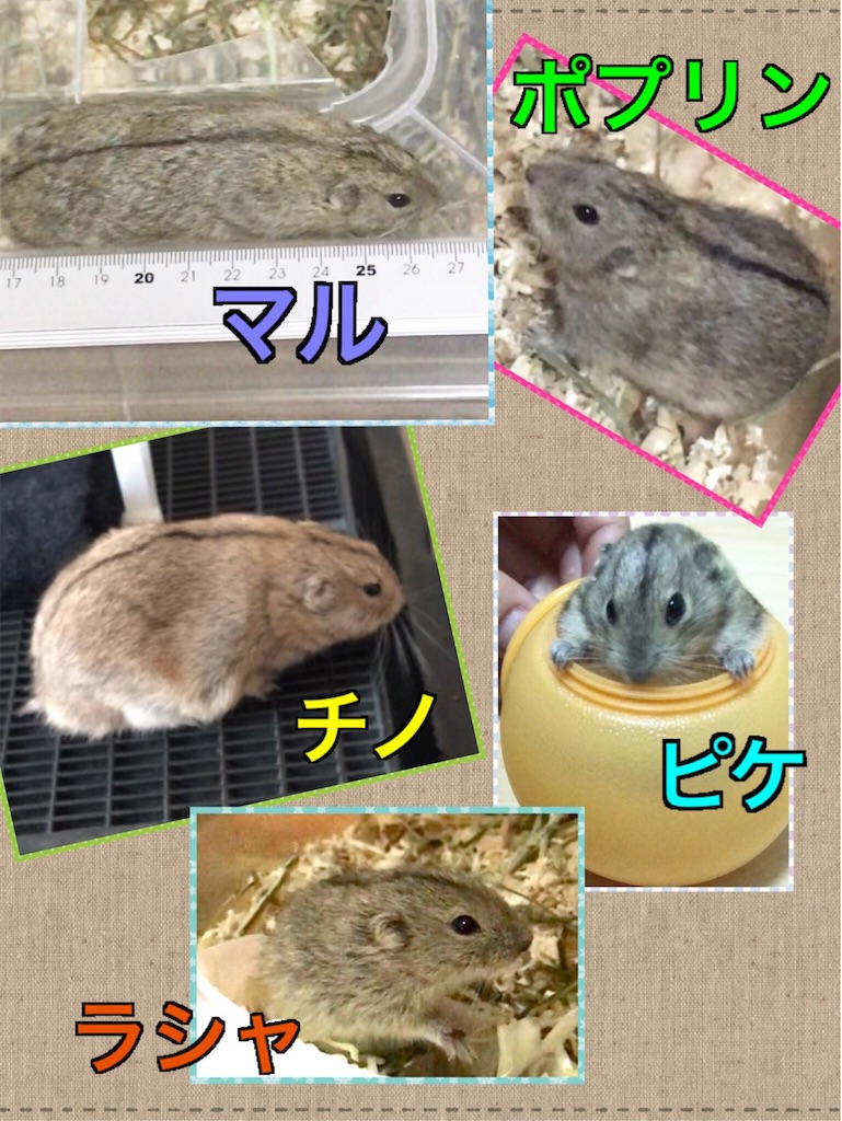 f:id:yoshi91:20190917174934j:image