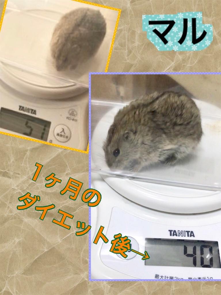 f:id:yoshi91:20191024024127j:image