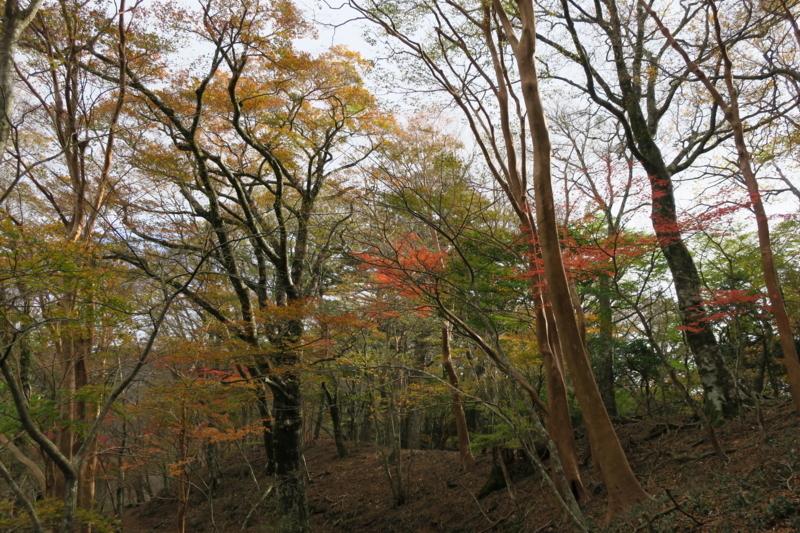 f:id:yoshi_10:20171112211952j:plain