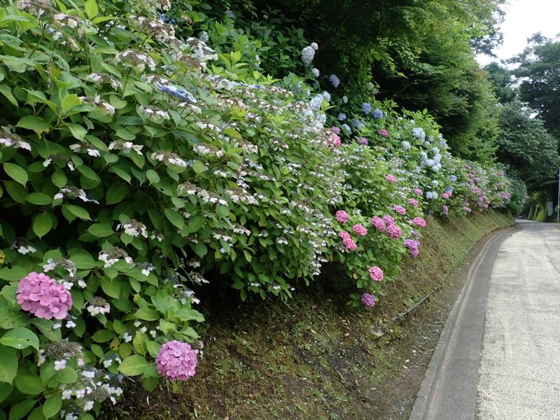 f:id:yoshi_10:20180623142350j:plain
