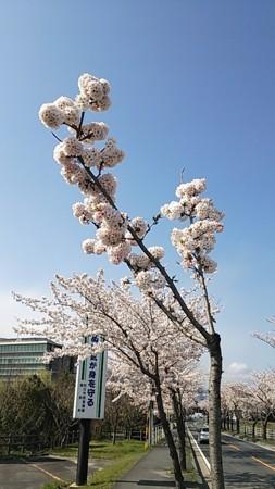 f:id:yoshi_kun:20140405145103j:image