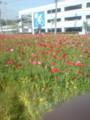 久里浜駅前がお花畑