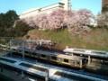 桜と総武線。