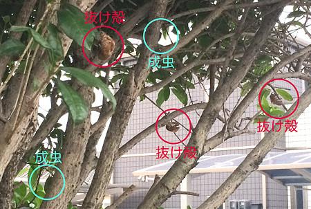 f:id:yoshibey0219:20140716222657j:image