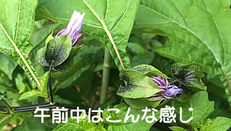 f:id:yoshibey0219:20150623185732j:image