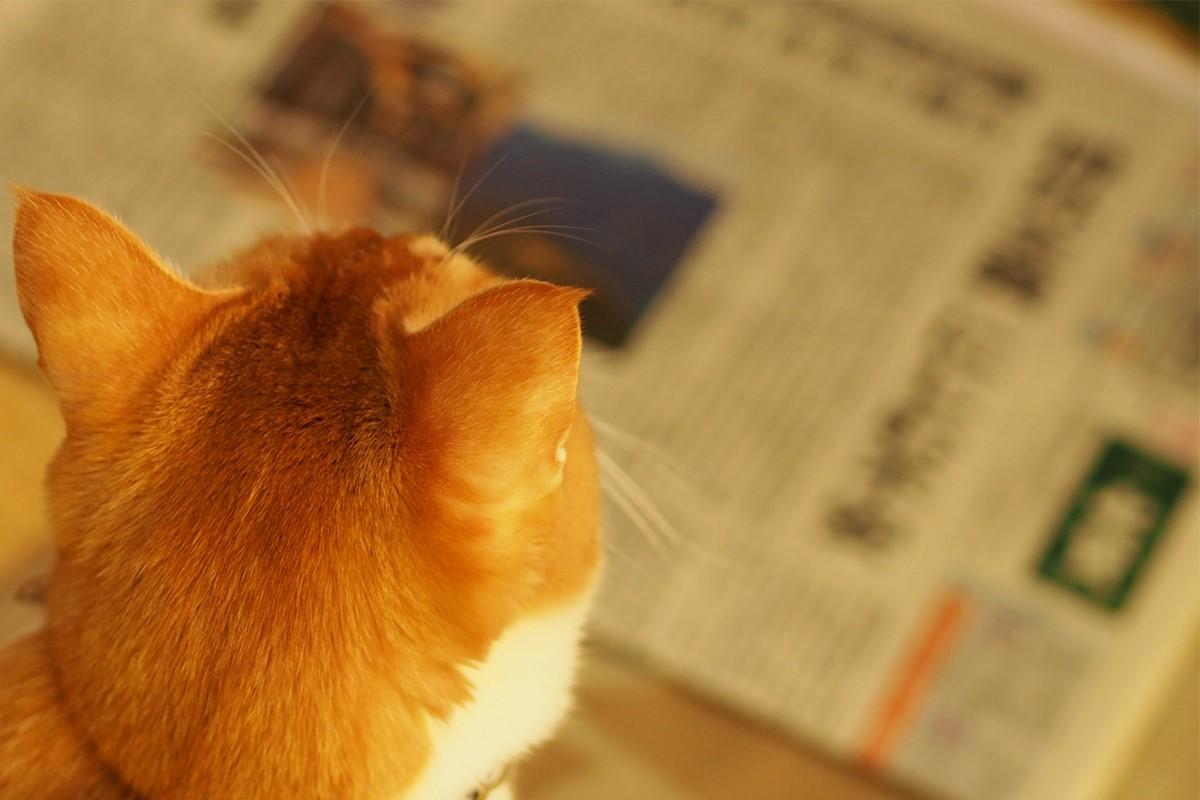 新聞の紙面の違いを見極める