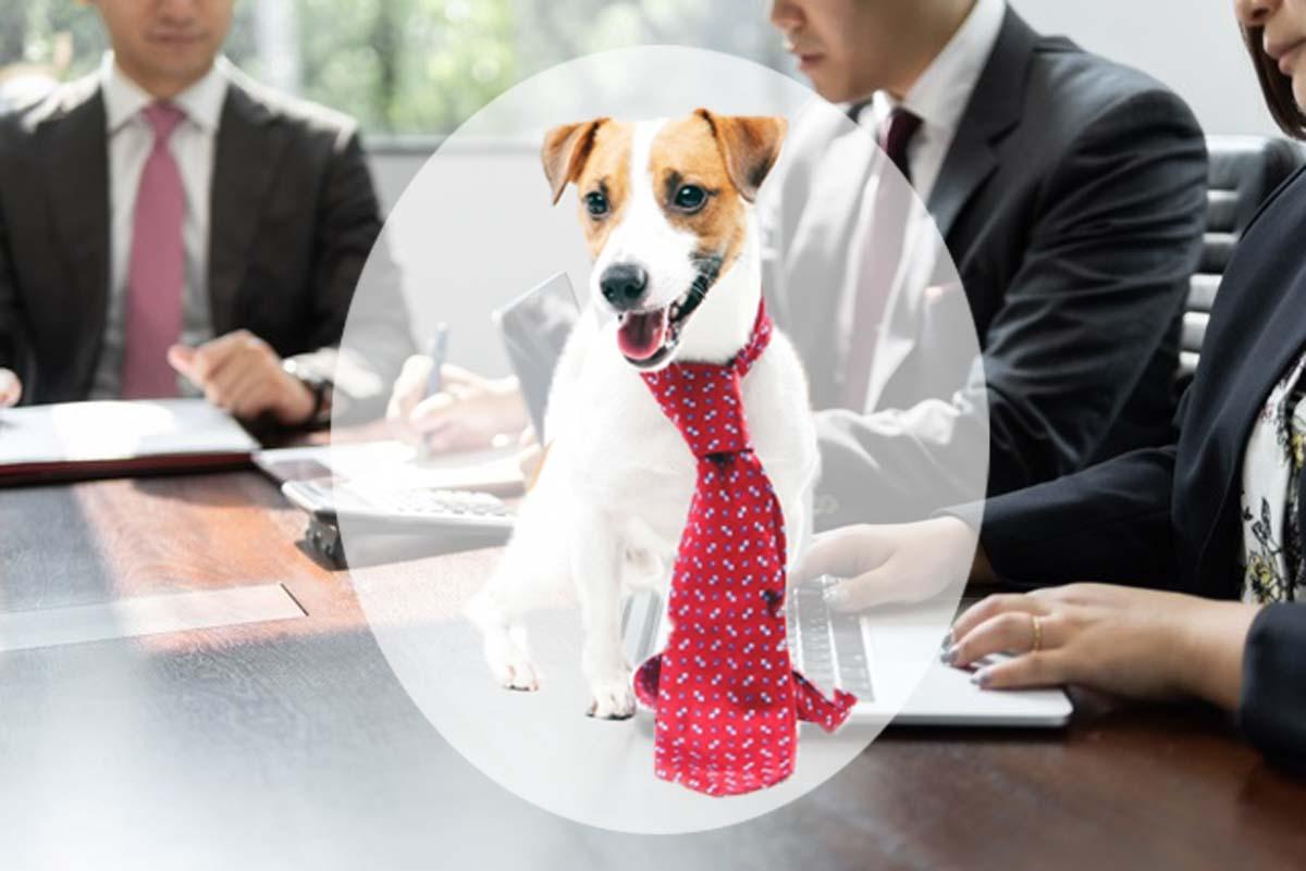 ペットと経営判断の関係