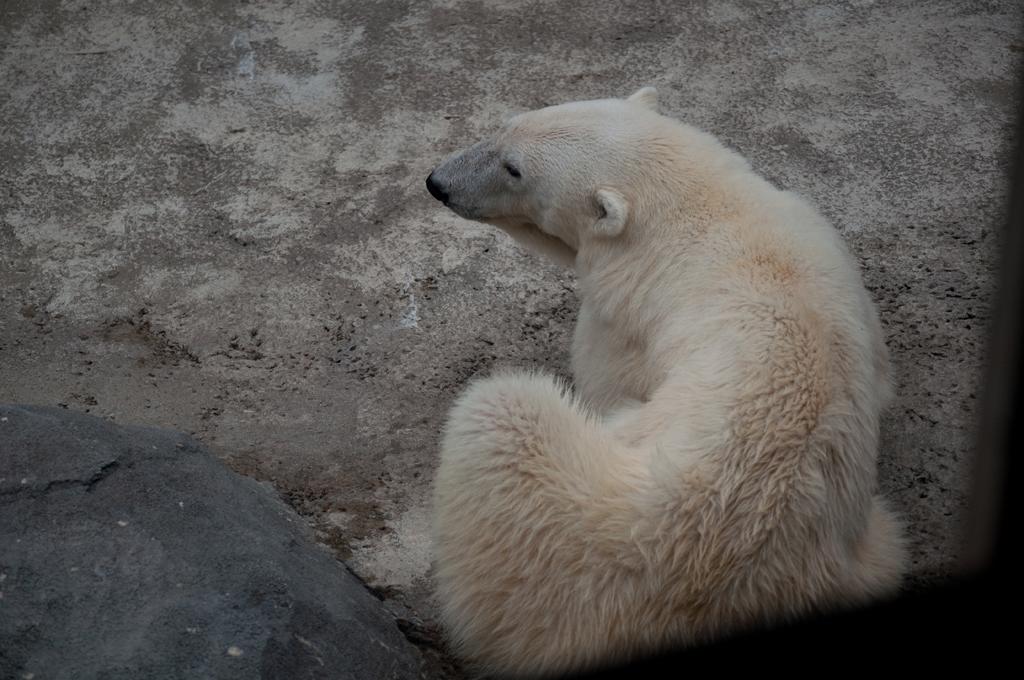 110830 旭山動物園