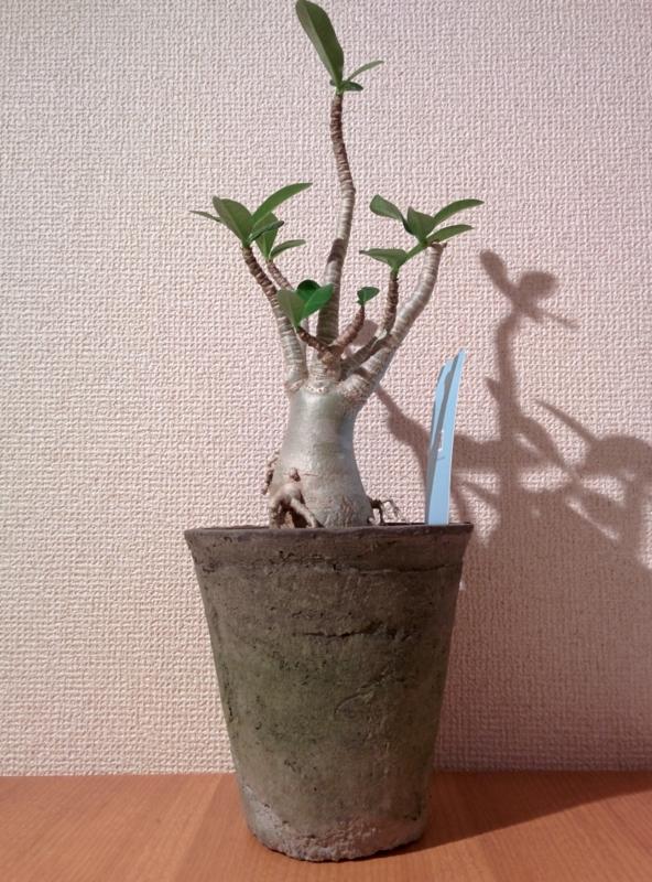 f:id:yoshida_lab:20150726215603j:plain