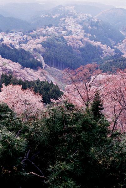 f:id:yoshida_melon:20120904152235j:image