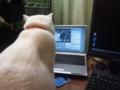[ネコ] ワンセグ視聴中