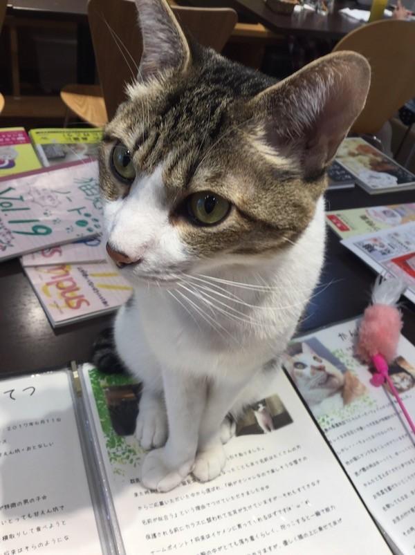 f:id:yoshii_hiroto:20180108134745j:plain