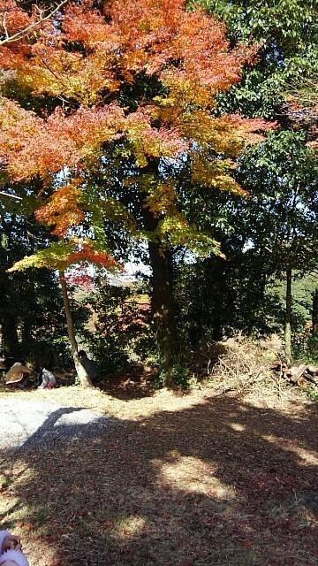 f:id:yoshikamama:20161126181333j:image