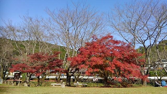 f:id:yoshikamama:20161126181352j:image