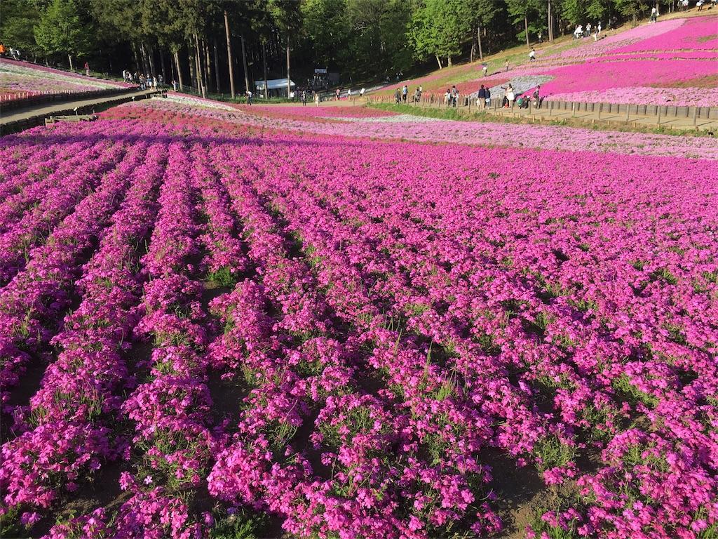 f:id:yoshikawa-yume-yume:20170506081640j:image