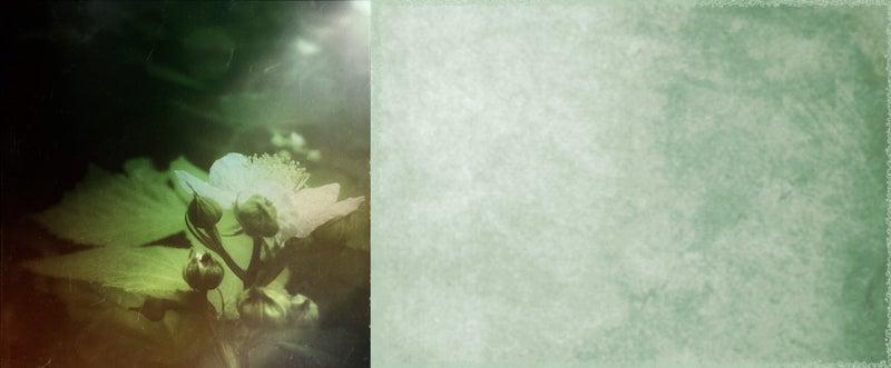 f:id:yoshikawa_ash:20211020205938j:plain