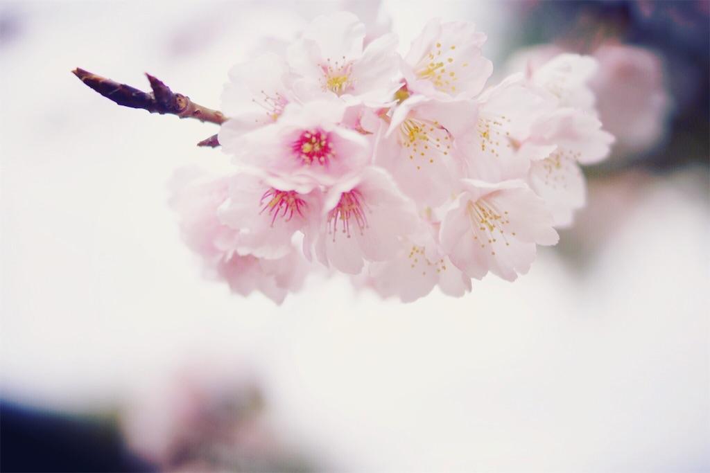 f:id:yoshikawalinen:20170317050537j:image