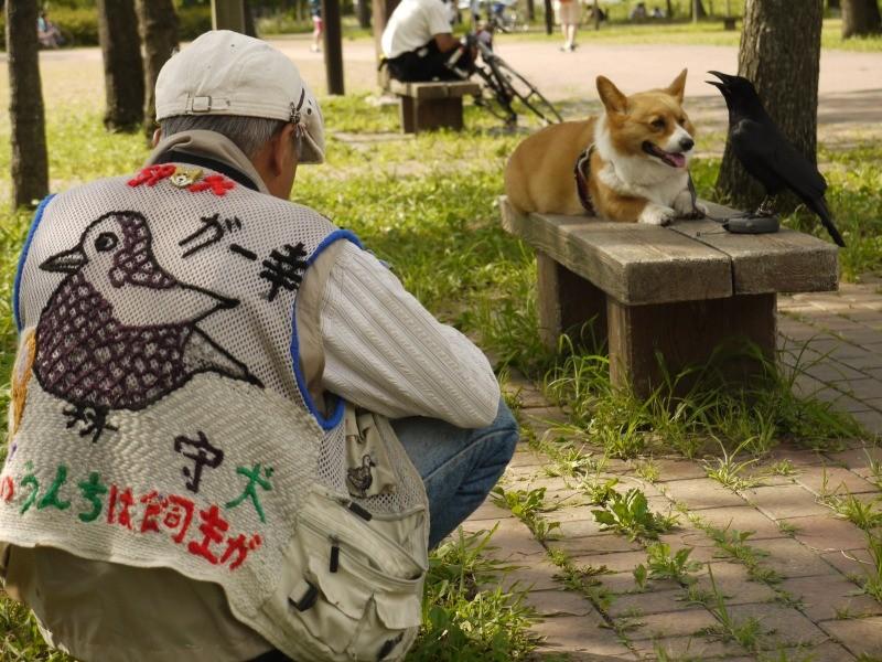 f:id:yoshikogahaku:20100723103453j:image
