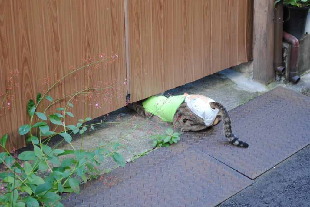 f:id:yoshikogahaku:20101014082403j:image