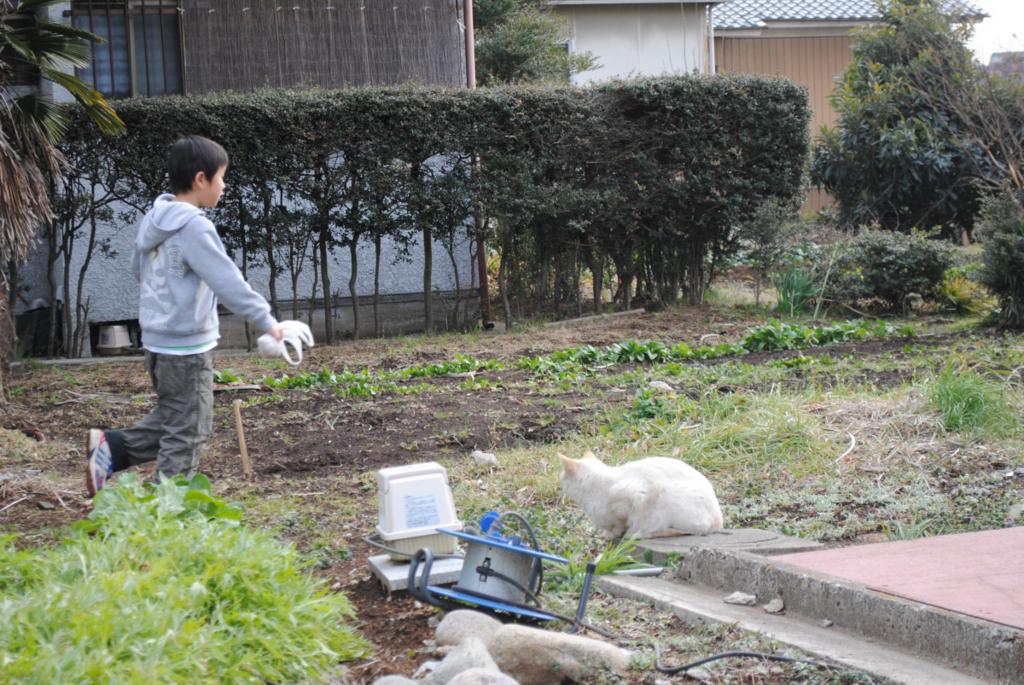 f:id:yoshikogahaku:20110220233123j:image