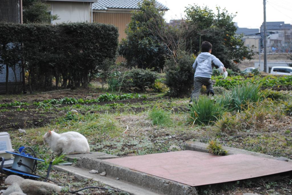 f:id:yoshikogahaku:20110220233125j:image