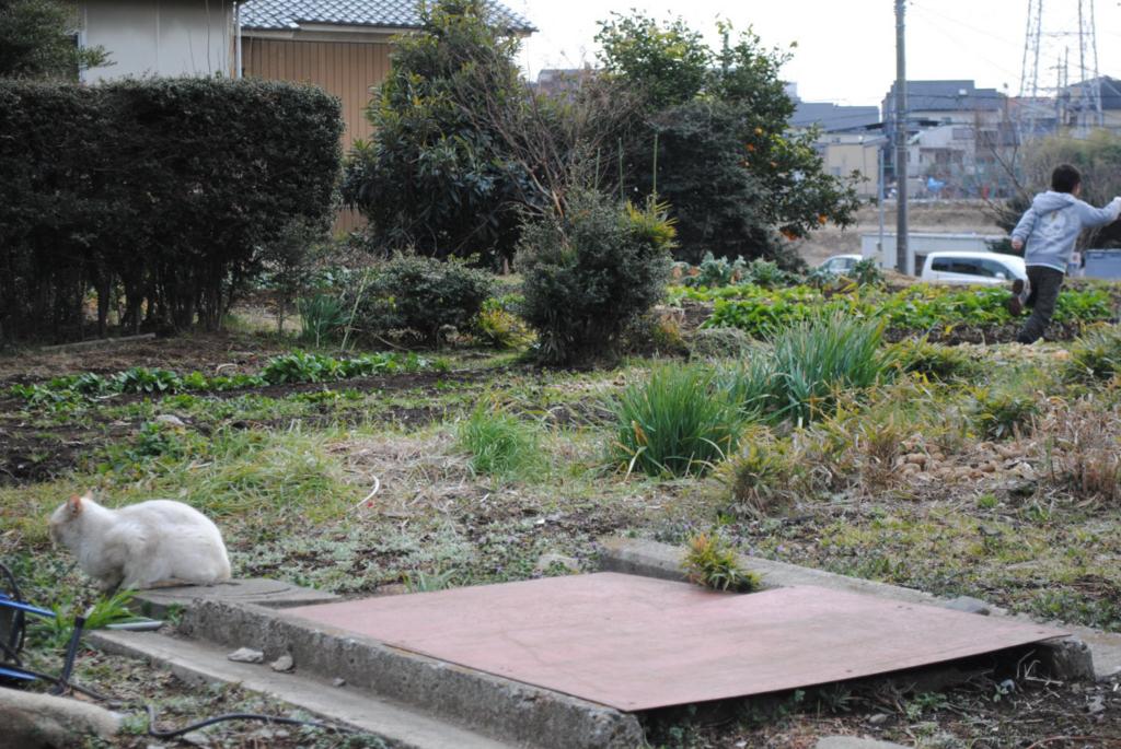 f:id:yoshikogahaku:20110220233126j:image