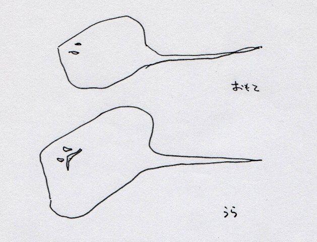 f:id:yoshikogahaku:20110618140707j:image