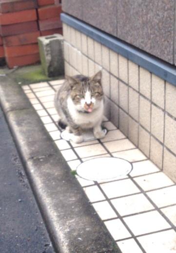 f:id:yoshimamo:20150228004621j:plain