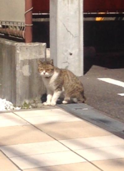 f:id:yoshimamo:20150327095935j:plain