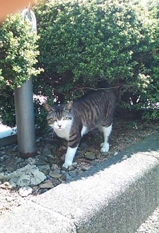 f:id:yoshimamo:20150503025341j:plain
