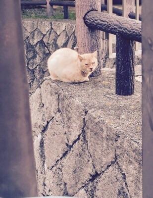 f:id:yoshimamo:20150612191525j:plain