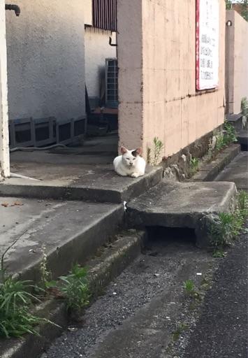 f:id:yoshimamo:20150807164216j:plain